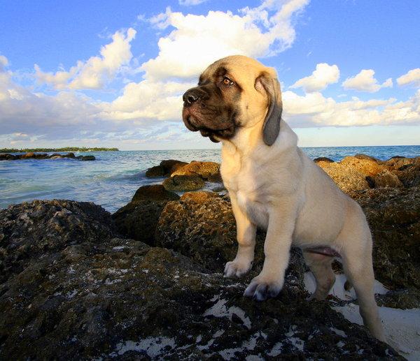 Atentie: Animale simpatice in 45 de poze! - Poza 36