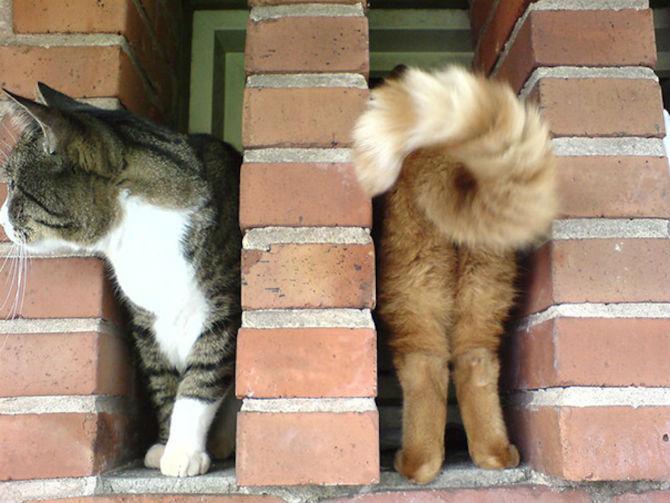 Altfel de poze cu pisici, in ipostaze haioase - Poza 18