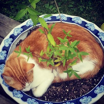 17 Pisici care dorm in cele mai haioase pozitii - Poza 1