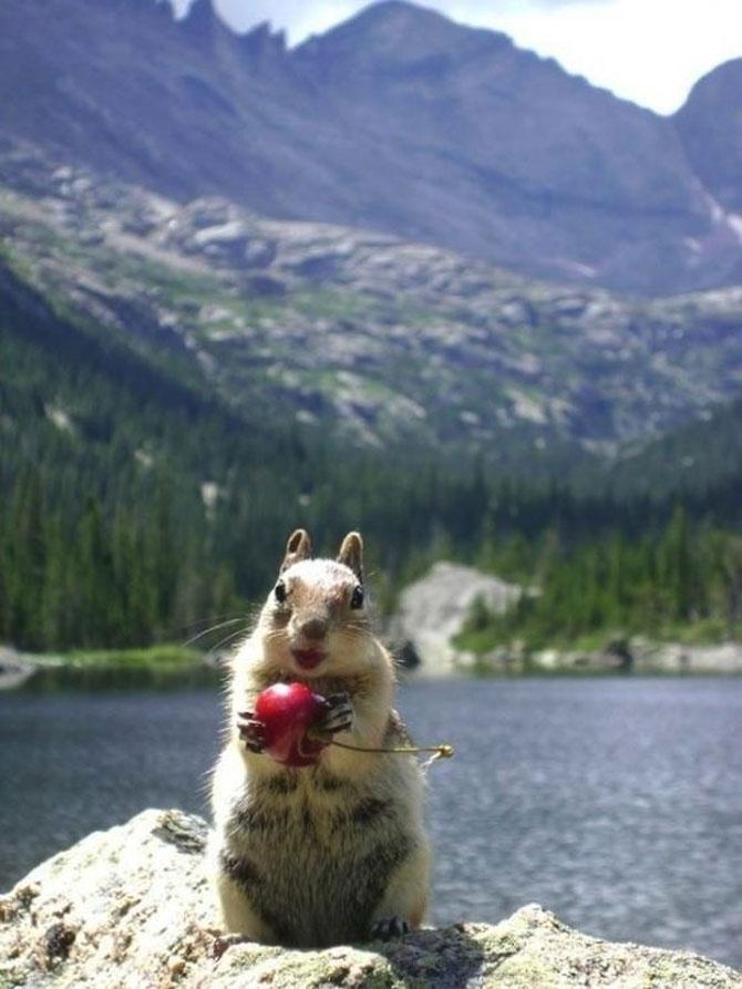20 de poze induiosatoare cu animale - Poza 1