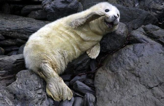 20 de poze induiosatoare cu animale - Poza 9