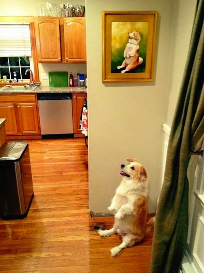 20 de poze induiosatoare cu animale - Poza 10