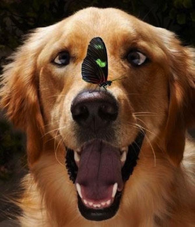 20 de poze induiosatoare cu animale - Poza 13