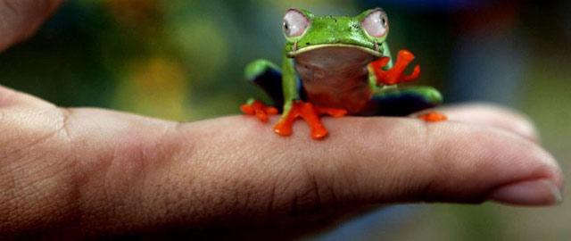30 de poze facute in Photoshop - Poza 19