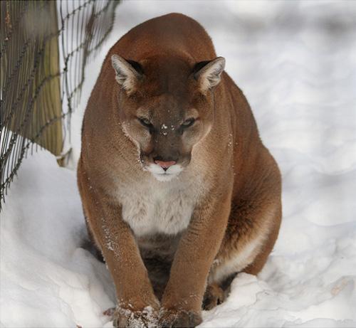33+1 poze: Animale adorabile prin zapada - Poza 24