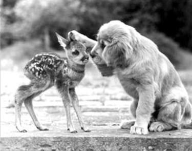 17 poze cu animale fericite - Poza 16