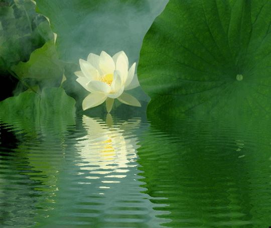 45 de fotografii cu reflexii impresionante - Poza 2