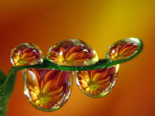 45 de fotografii cu reflexii impresionante - Poza 6