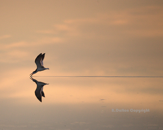 45 de fotografii cu reflexii impresionante - Poza 10