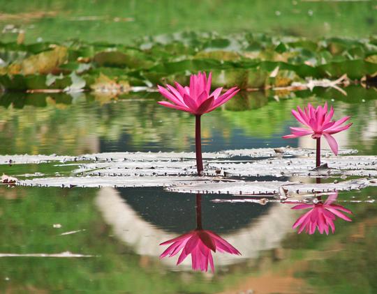 45 de fotografii cu reflexii impresionante - Poza 13