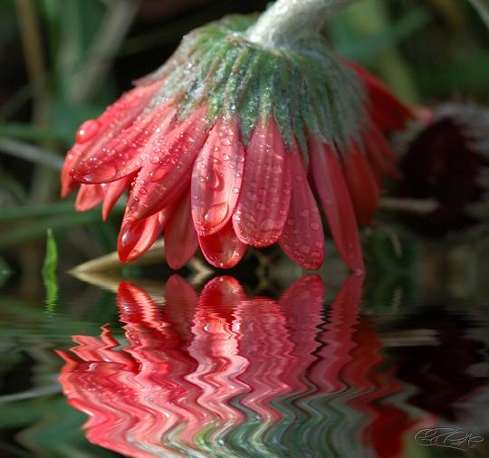 45 de fotografii cu reflexii impresionante - Poza 22