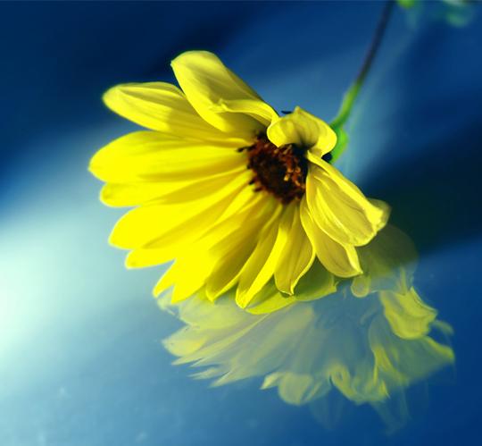 45 de fotografii cu reflexii impresionante - Poza 27