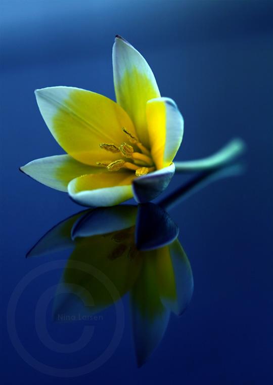 45 de fotografii cu reflexii impresionante - Poza 43