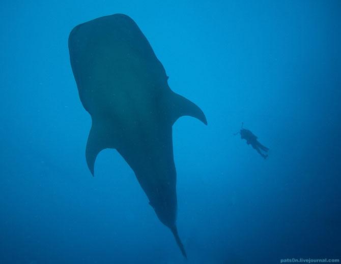 Intram in apa! 20 de fotografii cu lumea submarina! - Poza 1