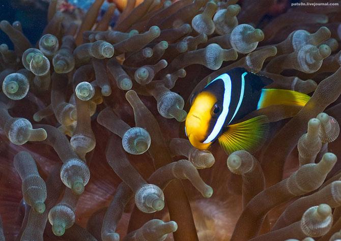 Intram in apa! 20 de fotografii cu lumea submarina! - Poza 10