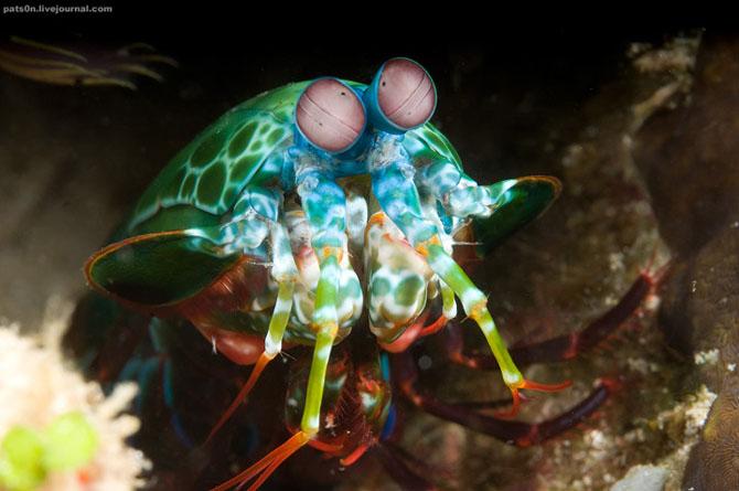 Intram in apa! 20 de fotografii cu lumea submarina! - Poza 11