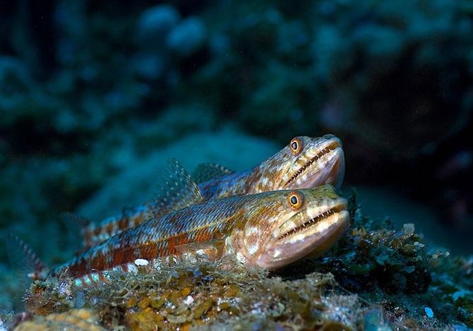 Intram in apa! 20 de fotografii cu lumea submarina! - Poza 14