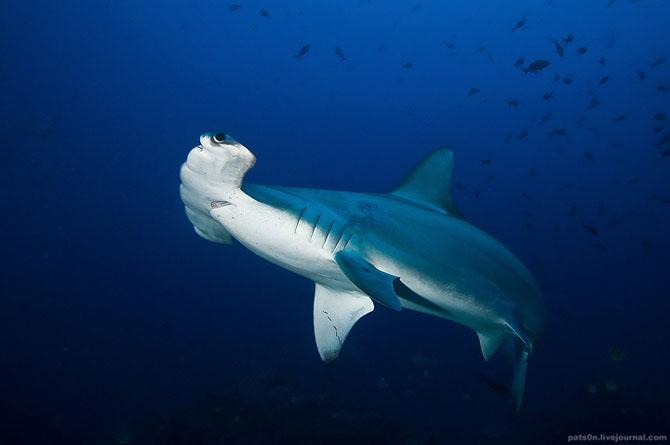 Intram in apa! 20 de fotografii cu lumea submarina! - Poza 17