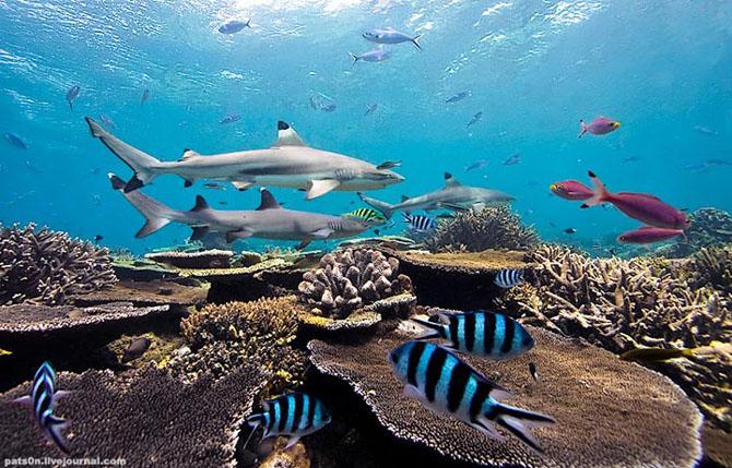 Intram in apa! 20 de fotografii cu lumea submarina! - Poza 2
