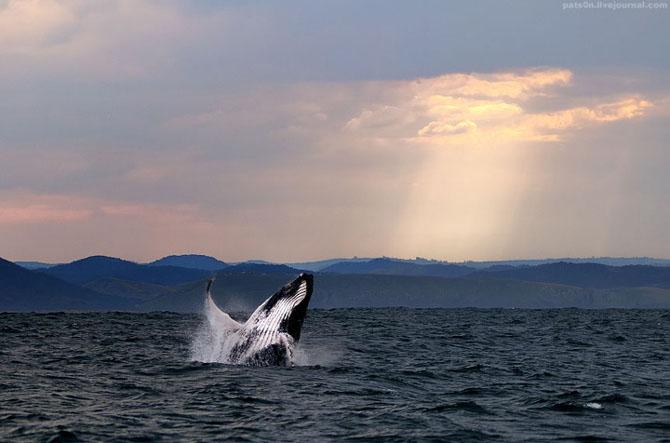 Intram in apa! 20 de fotografii cu lumea submarina! - Poza 3