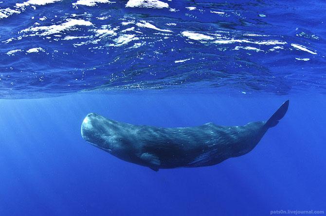 Intram in apa! 20 de fotografii cu lumea submarina! - Poza 6