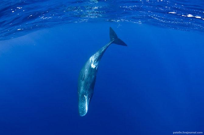 Intram in apa! 20 de fotografii cu lumea submarina! - Poza 7