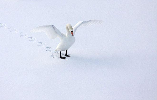 30 de fotografii superbe de Sandra Kreuzinger