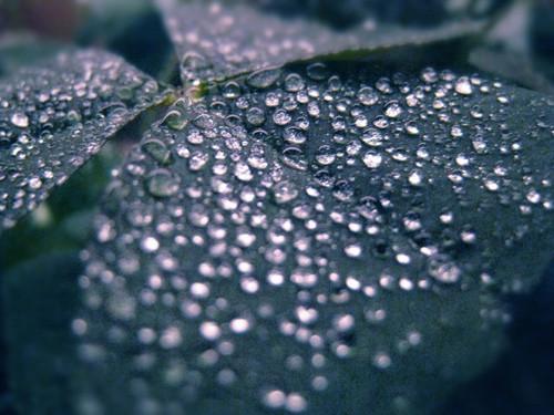 47 imagini cu roua, o splendoare naturala - Poza 41