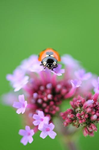 Natura, in toata splendoarea ei - Poza 27