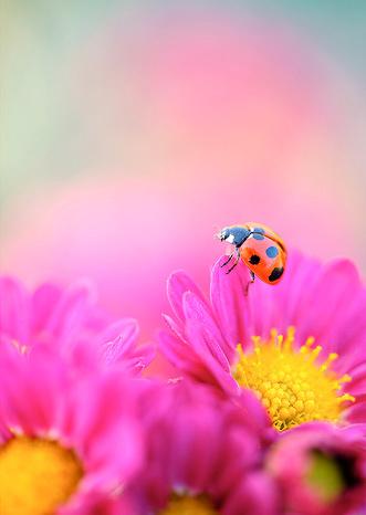 Natura, in toata splendoarea ei - Poza 21
