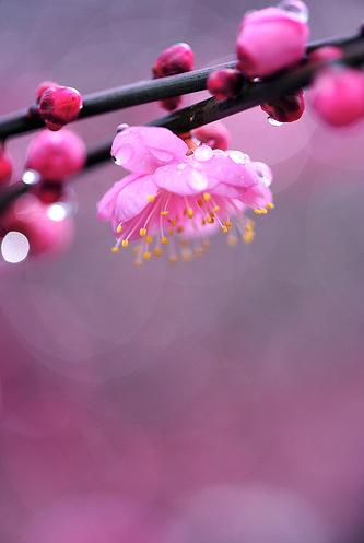 Natura, in toata splendoarea ei - Poza 20