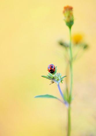 Natura, in toata splendoarea ei