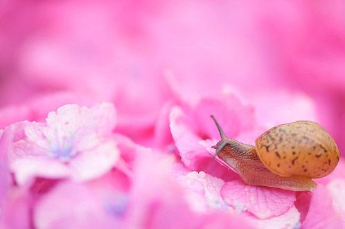 Natura, in toata splendoarea ei - Poza 6
