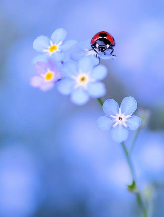 Natura, in toata splendoarea ei - Poza 14
