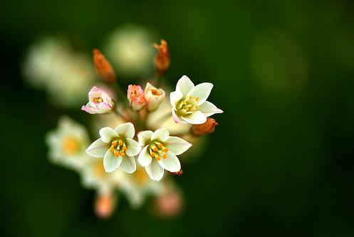 Natura, in toata splendoarea ei - Poza 5
