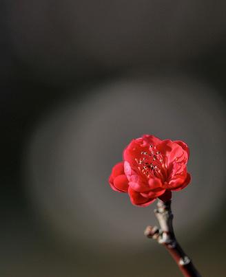Natura, in toata splendoarea ei - Poza 15