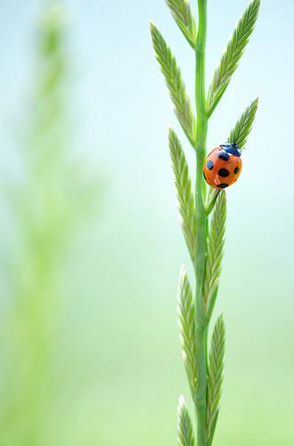 Natura, in toata splendoarea ei - Poza 26