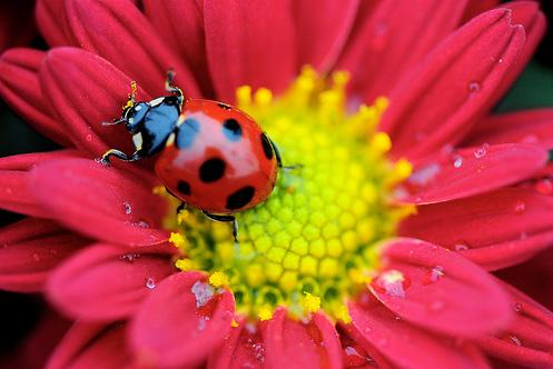 Natura, in toata splendoarea ei - Poza 2