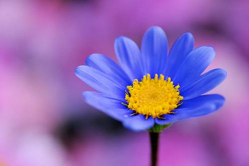 Natura, in toata splendoarea ei - Poza 9
