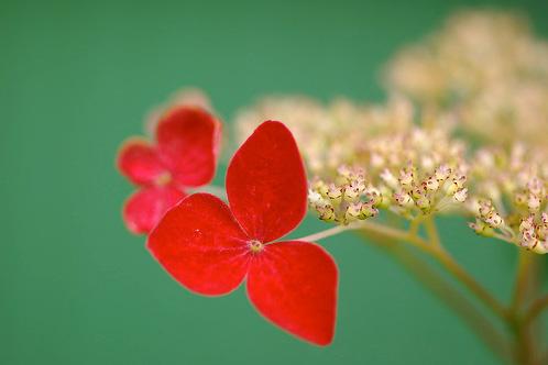 Natura, in toata splendoarea ei - Poza 8