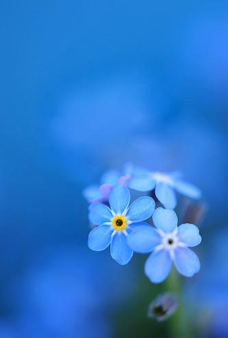 Natura, in toata splendoarea ei - Poza 25