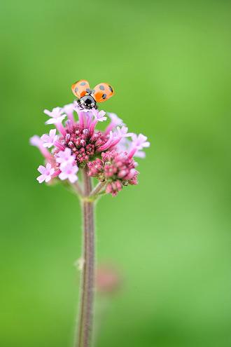Natura, in toata splendoarea ei - Poza 24