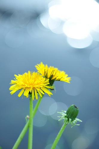 Natura, in toata splendoarea ei - Poza 23