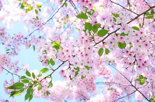 Natura, in toata splendoarea ei - Poza 3