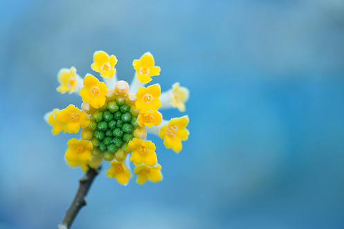 Natura, in toata splendoarea ei - Poza 13