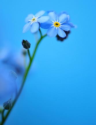 Natura, in toata splendoarea ei - Poza 22