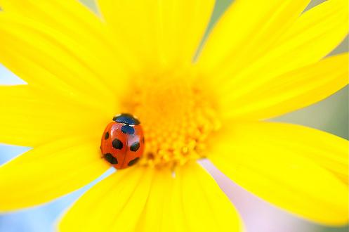 Natura, in toata splendoarea ei - Poza 11