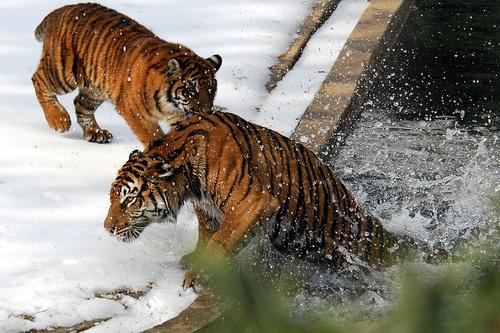 33+1 poze: Animale adorabile prin zapada - Poza 26