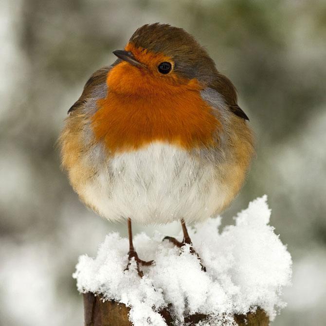 30 de fotografii minunate de Peter Spencer - Poza 15