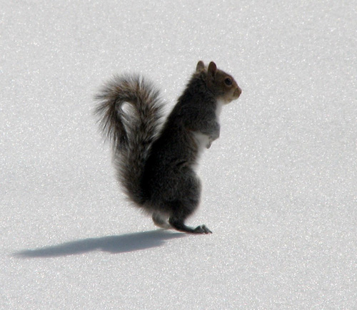 33+1 poze: Animale adorabile prin zapada - Poza 31